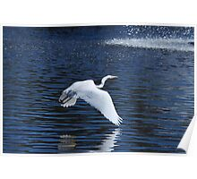 White Heron Flying over water Poster
