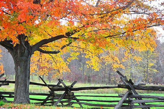 Fall by Misti Love