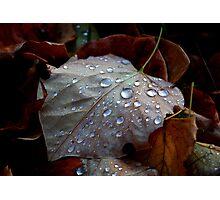 Autumn Tears Photographic Print