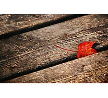 Red Leaf & Wood Planks Photographic Print