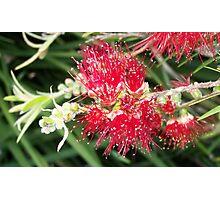 Wild Aussie Photographic Print