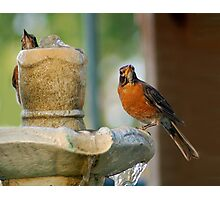 Robins Photographic Print