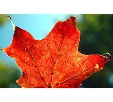 Fall Maple Photographic Print