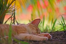 The Abstract Dreams of a Cat by Peter Denness