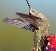 Hummer by onnibright