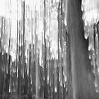 Light in trees, Daylesford 2008 by Ashley Ng