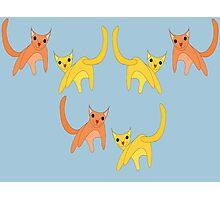 Falling Cats  Photographic Print
