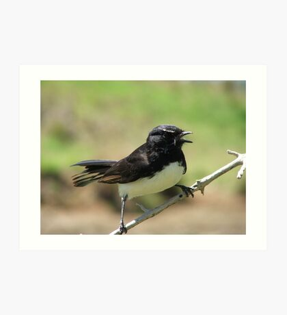 Willy Wagtail Art Print