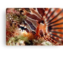 Zebra Lionfish Canvas Print