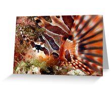 Zebra Lionfish Greeting Card