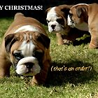 ~I TOLD YOU NO PHOTOS - Xmas Card~ by a-m .