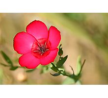 Rasberry Red Photographic Print