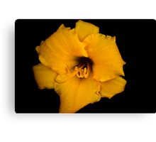 Black and Yellow Canvas Print