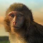 monkey madness 2 longleat by zacco