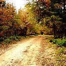 Jonkershoek forest by fourthangel