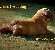 ~Flat Out - Xmas Card~ by a-m .