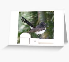 Willy Wagtail. Greeting Card