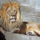 His Royal Highness by Jarede Schmetterer