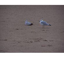 sea gulls Photographic Print
