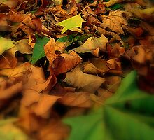 Leaves by BrigiBano