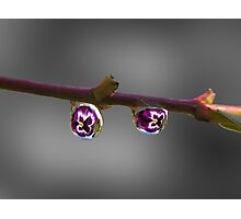 Selective water droplets Photographic Print