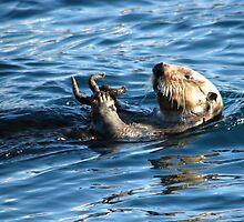 Sea Otter by lilestduncan
