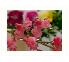 Pink flowers with water droplets Art Print