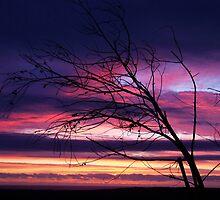 """""""Dawns Aura"""" by debsphotos"""