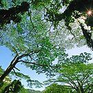 Manoa Falls Trail Canopy by kevin smith  skystudiohawaii