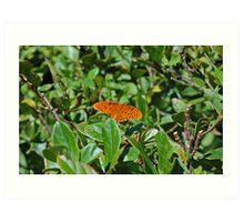 Orange in a field of green Art Print
