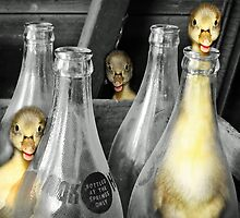 Ducklings into Mischief   by Doty