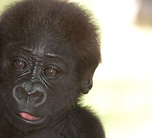 BABY GORILLA 2 by pulsdesign