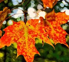Autumn Joy by Kathleen   Sartoris