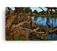 """Reaching for the Water"" Canvas Print"