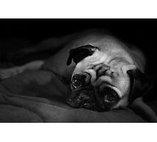 Living The Pug Life Photographic Print