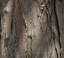 Honey Locust Tree Bark by Anna Lisa Yoder