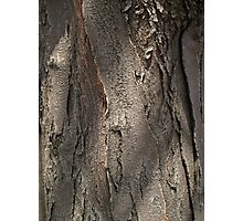 Honey Locust Tree Bark Photographic Print