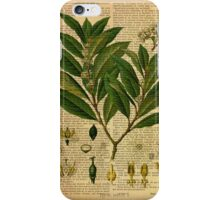 Botanical print, on old book page iPhone Case/Skin