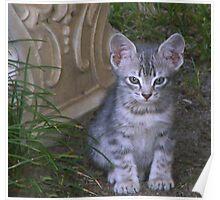 Tabby Kitten  * Izzie * Poster