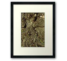 Gnarled Tree Bark, Haiti Framed Print