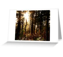 Sun shining through the pines at Whinfell Greeting Card