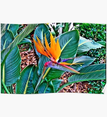 Bird Of Paradise - The HDR Series Poster