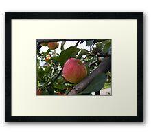 Spring Apple Framed Print
