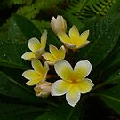 Frangipani Bunch by Keith G. Hawley