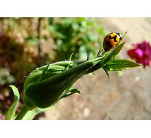 ladybird, ladybird, fly away home Photographic Print