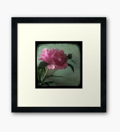 Grandma's Peonie - Still Life TTV Framed Print