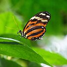 Butterfly at rest by Maria Marsico