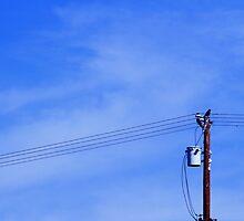 Crow on a Telephone Pole by Lady1ATrombone