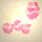 Hazy Pink Tulips by Sylvia Coomes