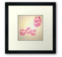 Hazy Pink Tulips Framed Print